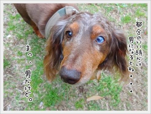 fc2_2015-5-14_02.jpg