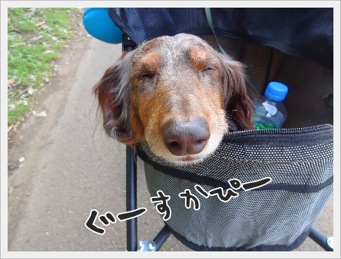 fc2_2015-5-19_10.jpg