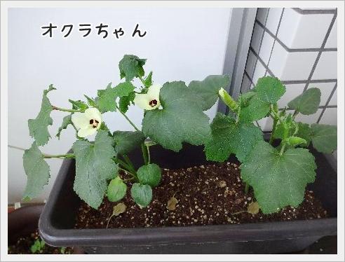 fc2_2015-5-27_04.jpg