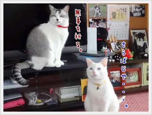 fc2_2015-5-8_05.jpg