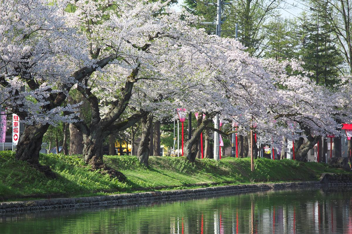 2015桜4256