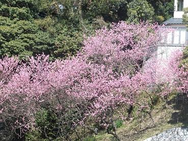 higasiyama1.jpg