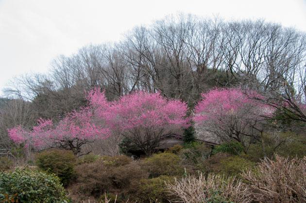 20150315四季の森21