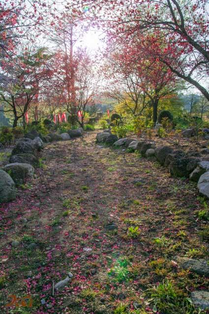201040426龍願寺14