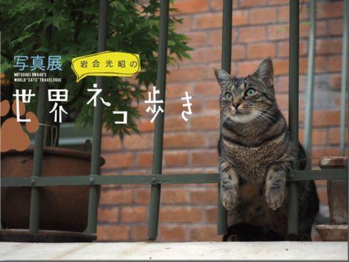 kuro_150313neko01.jpg