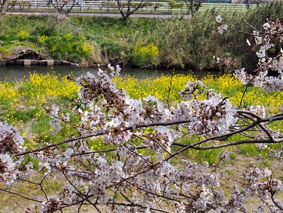 nakagawa-20150328-03s.jpg