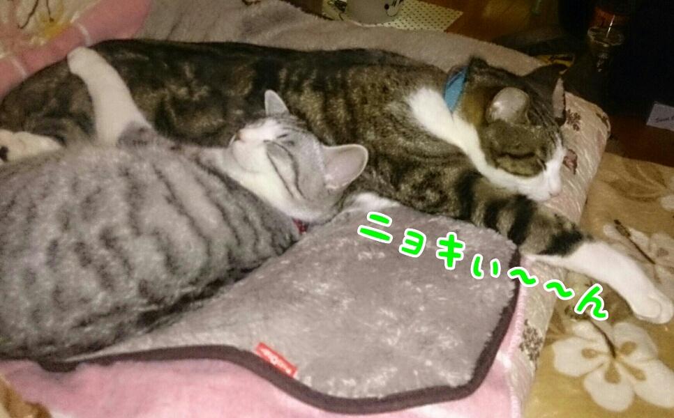 fc2_2015-02-24_22-27-59-437.jpg