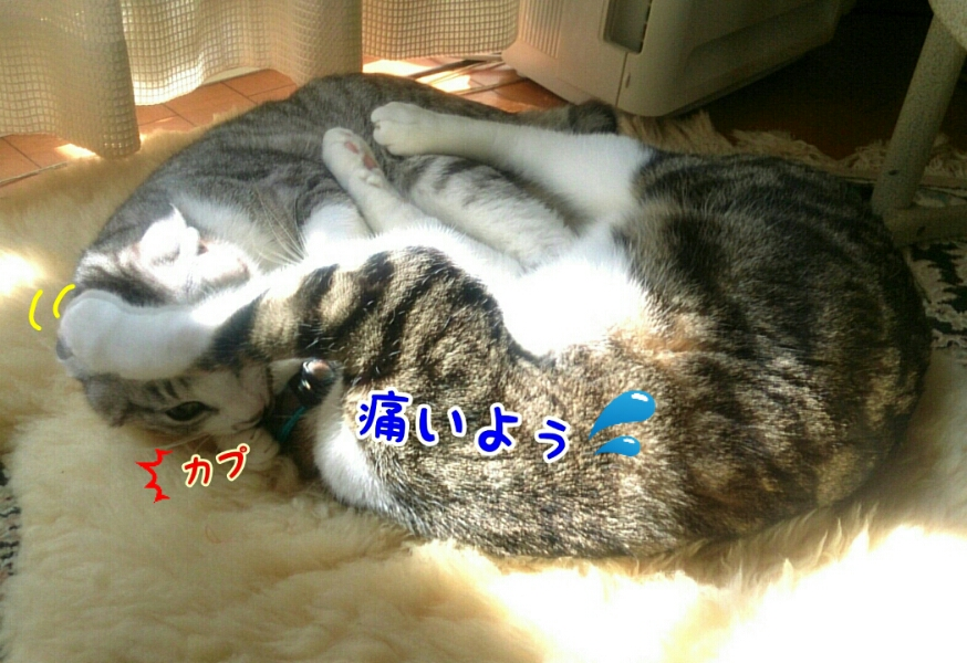 fc2_2015-03-17_15-29-48-093.jpg