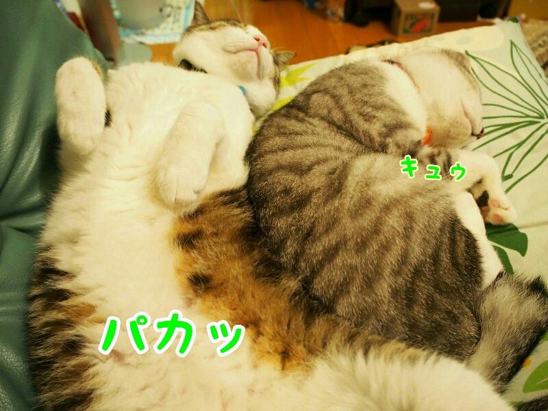fc2_2015-06-03_23-01-13-968.jpg