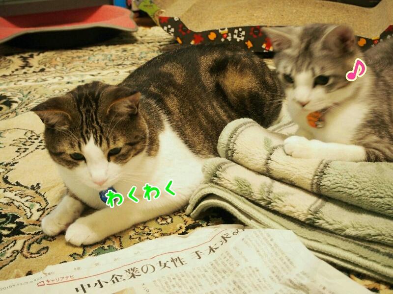 fc2_2015-06-03_23-31-48-844.jpg