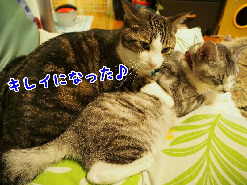 fc2_2015-06-05_13-17-40-853.jpg