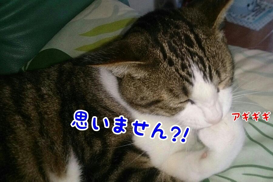 fc2_2015-06-09_14-42-31-778.jpg