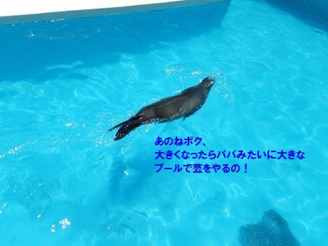 DSCN7796.jpg
