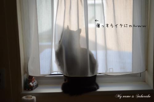 桜子ちゃん♪747