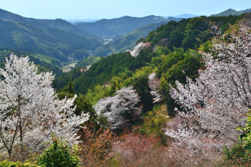 「山里の春1」   (高知県南国市)
