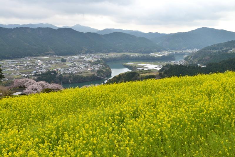 「菜の花咲く天空の里」   (高知県香北町)