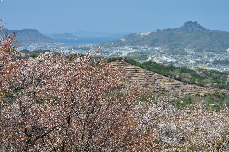 「五剣山・屋島遠望山桜」    (香川県さぬき市)