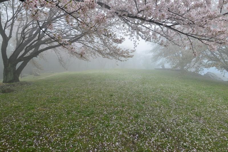 「霧の紫雲出山」  (香川県紫雲出山)
