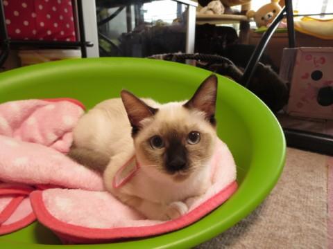 cat_44005_1.jpg