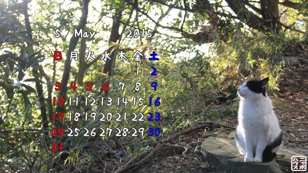 5月の猫デスクトップカレンダー(壁紙)