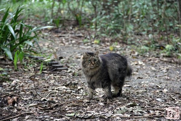 ペルシャ風野良猫/ニャポハウス