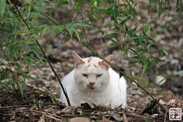 白猫大仏さん / ニャポハウス
