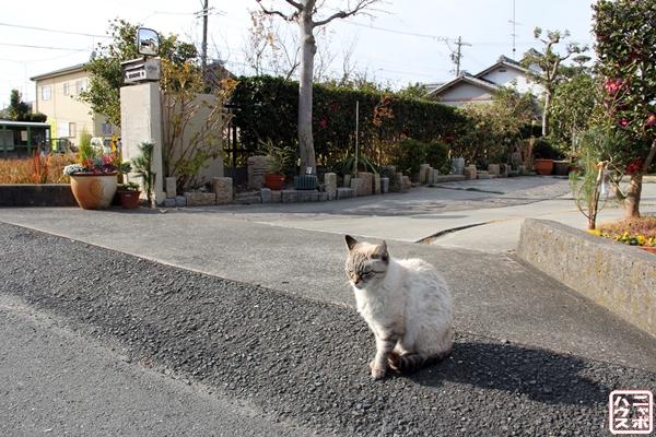 浜松で出会った老猫