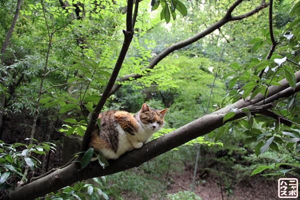 木の枝で休憩する三毛猫ちゃん