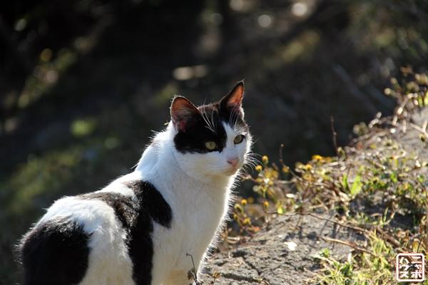 鋸山の猫 2014