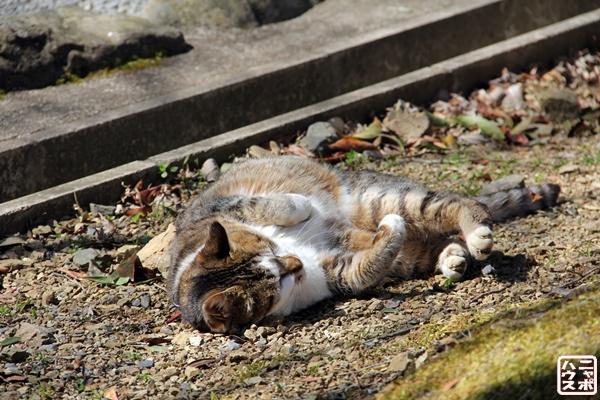 今日の1枚 のら猫写真 京都