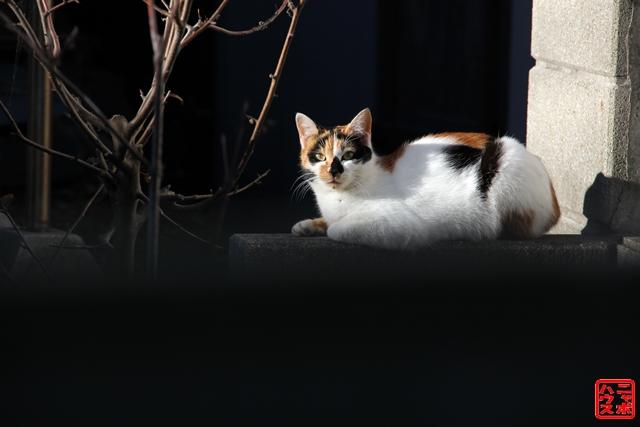 ニャポ旅3 浜金谷猫