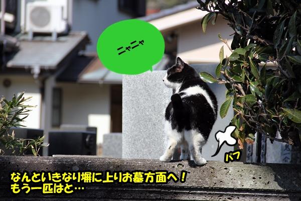 ニャポ旅6 猫寺 鎌倉 光明寺編