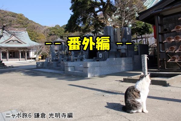 """ニャポ旅6 鎌倉""""猫寺""""光明寺"""