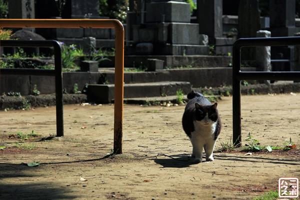 ニャポ旅7 谷根千散策 番外編