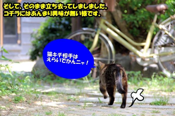 ニャポ旅8 名古屋 猫