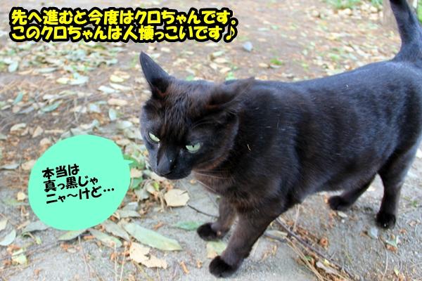ニャポ旅8 名古屋 中編 のら猫