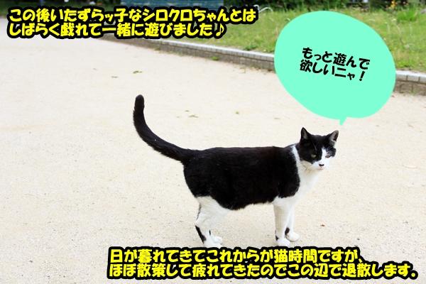 ニャポ旅8 名古屋 中編 野良猫