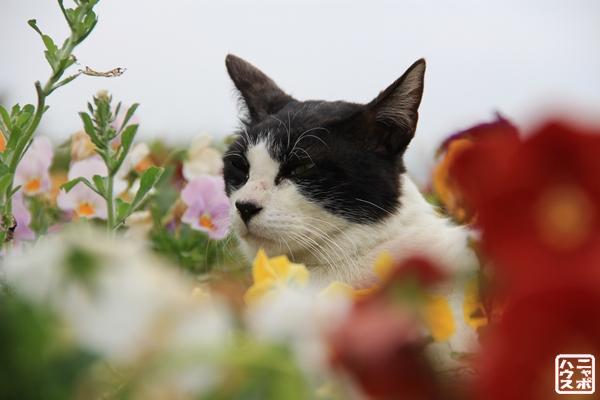 ニャポ旅8 名古屋 野良猫 /ニャポハウス