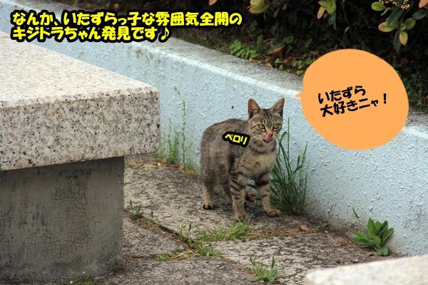名古屋 後編 のら猫 / ニャポハウス