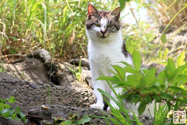 鋸山 猫 / ニャポ旅9 南房総編