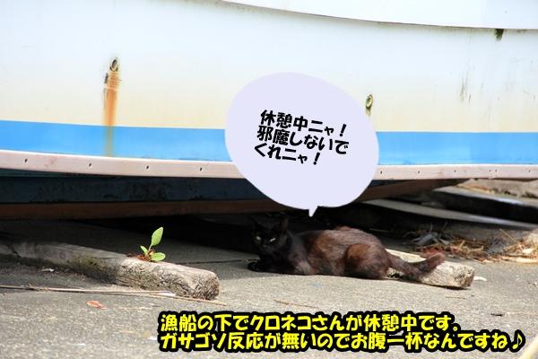 ニャポ旅9 館山猫