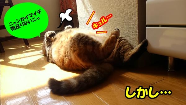 ニャポハウス デブ猫の方程式