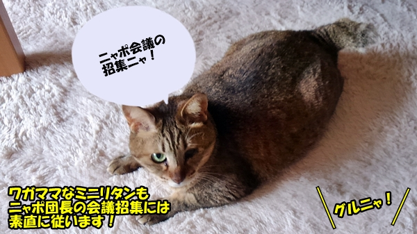 ニャポリタン団長のダイエット 後編