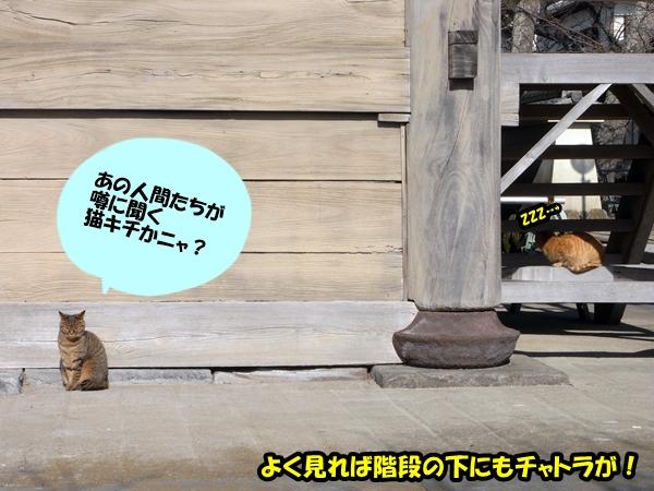 ニャポ旅6 鎌倉 猫寺 光明寺編