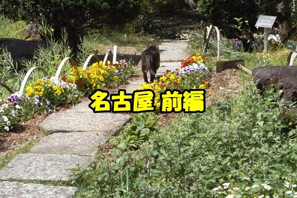 名古屋 野良猫