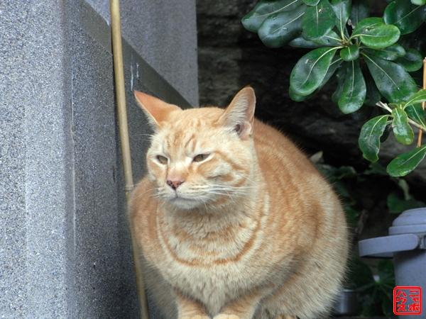 ニャポ旅5 江の島編 猫写真