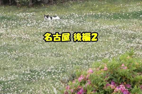 名古屋 野良猫 / ニャポハウス