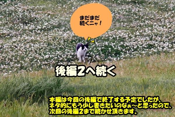 名古屋 後編 のら猫 / ニャポ旅8