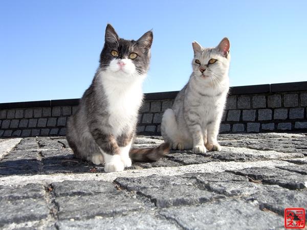 猫 シロとクロは仲良し