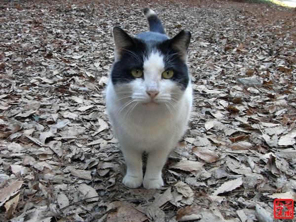 野良猫写真 シロクロです♪